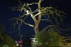 Architectral Lighting - Trees, Lakes, Mirrorballs too!